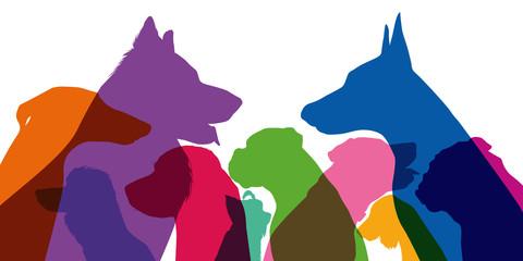 chien - tête - silhouette - profil - race - espèce -animal de compagnie - vue de profil - canin - canidé