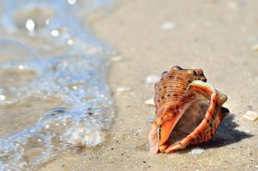 Sea waves wash the seashells on the beach