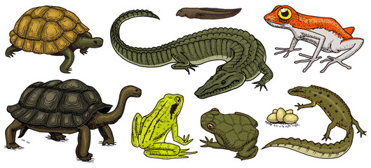 Crocodile and turtle. Reptiles and amphibians set. Pet and tropical animals. Wildlife and Frogs, lizard and turtle, chameleon and anuran Engraved hand drawn in old vintage sketch. Vector illustration.