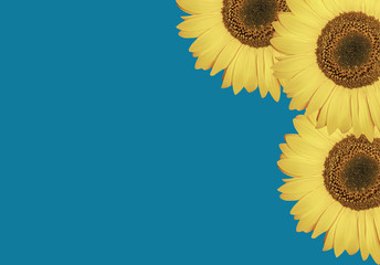 Bloom  pattern from  sunflowers or beautiful  spring  vibrant floral background. Summer design. Concept  botany.  Flat lay, top view