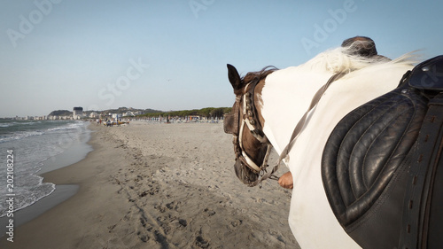 Man walking on beach renting a ride horse  Riding a horse is