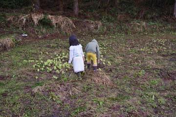 山菜取りをする子供たち