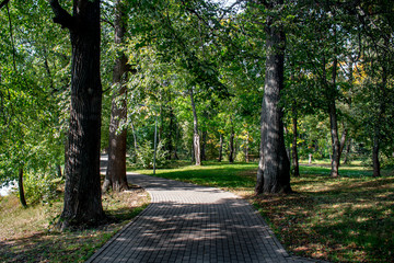 Park paved path between old lindens in a summer day