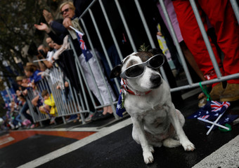 A dog wearing an Australian flag sits roadside during an Anzac Day parade in Sydney