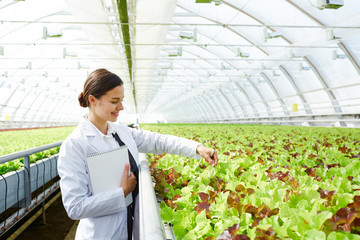 Young attractive Caucasian woman in white overall checking lettuce growing in commercial greenhouse and smiling joyfully