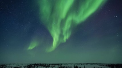 Fototapete - Northern Lights Over Boreal Forest Time-Lapse
