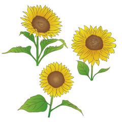 ひまわり 夏の花
