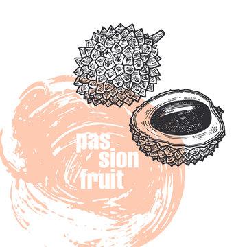 Realistic illustration of lychee fruit isolated on white background.