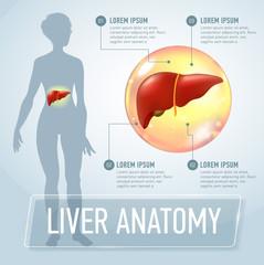 Vector liver infographics banner illustration