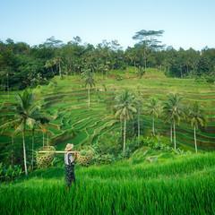 Wall Murals Indonesia Bali rizière en terrasse, Ubud, Bali