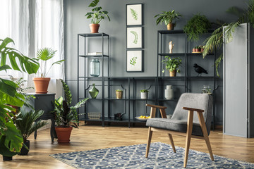 Elegant, gray living room interior with plants on metal racks standing against dark wall with molding behind a vintage armchair