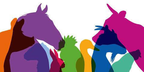 animal de la ferme - ferme - tête - silhouette - animal - profil - agricole - cochon - coq - poule