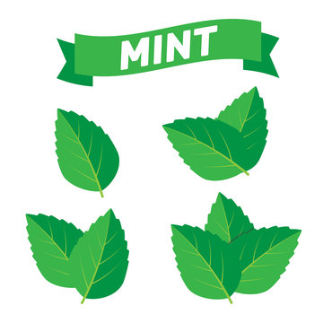 Mint green vector illustration set. Mint logo vector