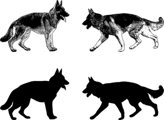 german shepherd dog silhouette and sketch - vector