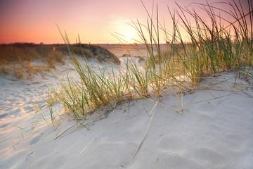 Abendlicht an der Sanddüne