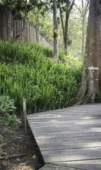 Wooden walkway with tropical garden