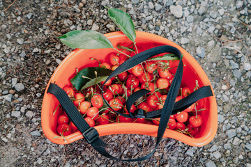 Ripe red cherry in plastic container