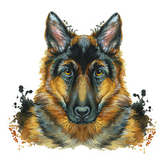 Watercolor printshop, print on the theme of the breed of dogs, mammals, animals, breed German shepherd, portrait, color red-black, intelligent eyes, kind, looks at the soul, looks straight, portrait