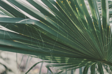 Background with green palm tree leaf, selective focus. Tropical plant
