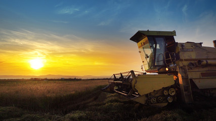 The sun setting down with combine farmer harvesting on rice field