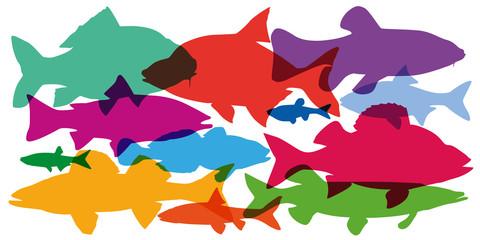 poisson - poisson d'eau douce - silhouette - pêche - pécheur - vue de profil - rivière - lac - profil