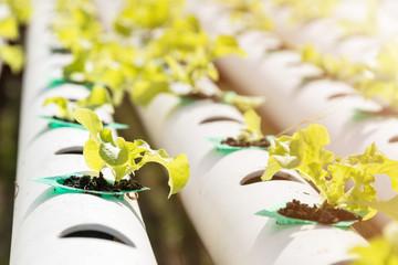 Outdoor hydroponic farming