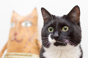 Portrait of a brooding black and white cat with a cat-doll in the background