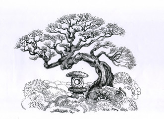 A tree of bonsai in the garden.