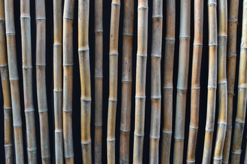 Bamboo fence or wall background