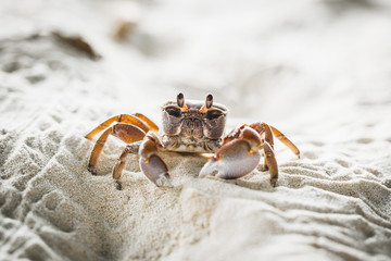 Close up of crab on sand at beach