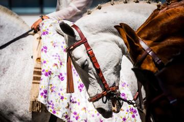 II Desfile y Exhibicion de Amazonas en Torremolinos, Andalusia, Spain