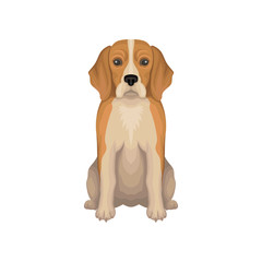Colorful illustration of Beagle. Small breed of hunting dog with long ears, short hair and cute muzzle. Detailed flat vector icon