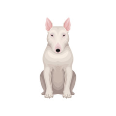Bull terrier dog with egg-shaped head, short white hair and pink ears. raphic Detailed flat vector design for poster of zoo store or kennel club