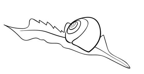 Vector illustration of lying on leaf snail shell
