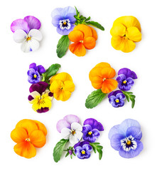 Pansy flowers and viola tricolor set