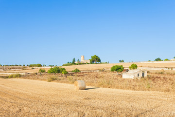 Santa Margalida, Mallorca - Hay yield on the fields of Mallorca