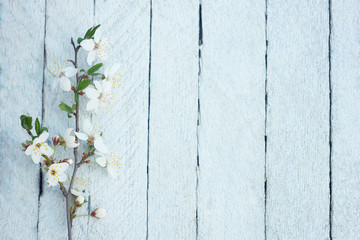 Spring flowers on wooden table background. Plum blossom. Top view.spring cherry blossom on a old wood background.Spring Blossom over wood background. Spring Flowers on wooden background