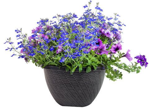 Floral Triple Threat Planter