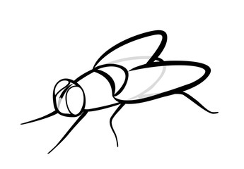 Vector illustration, isolated ordinary insect fly in black and white colors