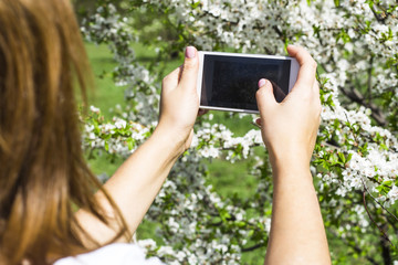 A girl is taking pictures of a spring blooming bush with a camera on her smartphone. Spring time concept