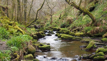 hillside stream running through mossy rocks and boulders with overhanging forest trees in dense woodland