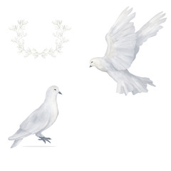 Pigeon clip art digital drawing watercolor bird fly flowers illustration similar on white background