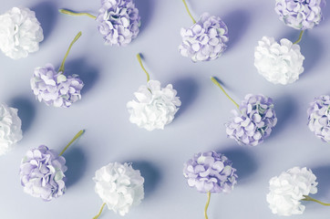 Blue and white Hydrangea flowers pattern on blue background
