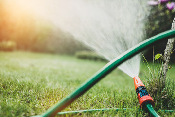 Watering plants in the garden, irrigating the soil. Garden work. The man is watering plants in the garden. A view of a man holding a coat. Saving water, care of plants.