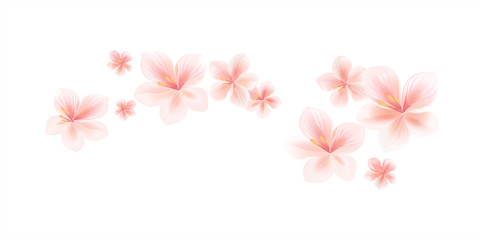 Flying light pink peach flowers isolated on white background. Apple-tree flowers. Cherry blossom. Border. Vector