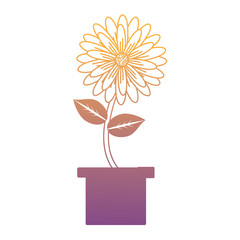 beautiful flower in a pot over white background, colorful design. vector illustration