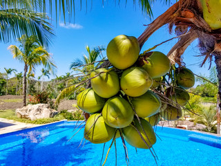 Coconuts at the swimming pool