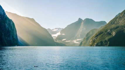 Sun rays and dolphins on a foggy morning at Milford Sound in Fiordland National Park, New Zealand, South Island.