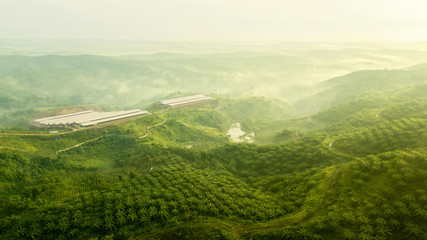 Aerial shot of green palm oil plantation