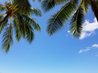 Coconut Tree Palms and Blue Sky